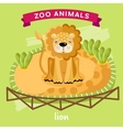 Zoo Animal Lion vector image vector image