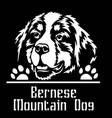 bernese mountain dog peeking dog - head isolated vector image vector image