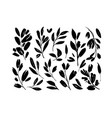 plant branches with leaves vector image