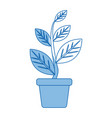 potted plant natural decoration interior image vector image vector image