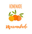 homemade orange marmalade vector image
