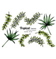 set tropical leaf drawing with line art on vector image