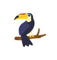 toucan bird hand drawn cute toucan vector image vector image