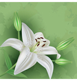 Vintage floral green background with flower lily vector image
