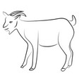 goat sketch on white background vector image vector image