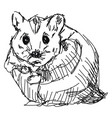 hamster drawing on white background vector image vector image