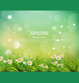 hello spring background with chamomile flowers vector image