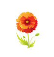 red poppy flower floral icon realistic cartoon vector image vector image