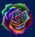 rose abstract multi-colored rose flower vector image vector image