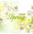 spring beautiful background with flowers daisies vector image