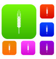 stalk of ripe barley set collection vector image vector image