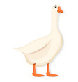 white goose icon cartoon style vector image