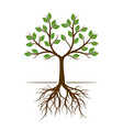 color shape of tree with roots vector image vector image