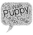 Learn The Strategies To Train Your Puppy To Accept vector image vector image