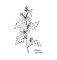 ink drawing plant of altay vector image vector image