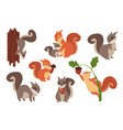 squirrel cartoon wild furry animals playing vector image vector image