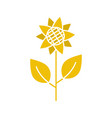 sunflower glyph color icon vector image vector image