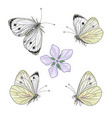 hand drawn flying and sitting cabbage butterflies vector image vector image