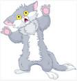 scared kitten vector image