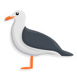 seagull icon cartoon style vector image