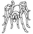 cartoon stylized blue tarantula spider vector image