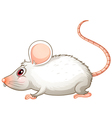 A white mouse vector image
