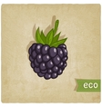 blackberry eco background vector image vector image
