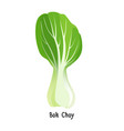 bok choy or pak choi type of chinese cabbage vector image vector image