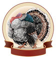graphical turkey-cock vector image vector image