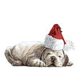 Puppy bulldogs 07 vector image vector image
