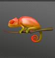 chameleon realistic transparent vector image