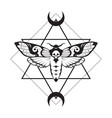 deaths head hawk moth and sacred geometry with vector image