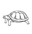 turtle outline icon vector image vector image