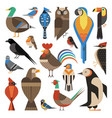 widespread common birds geometric set in flat vector image