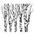 birch trees trunk with bark texture isolated vector image