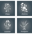 Collection of Herbs Labels for Essential Oils vector image