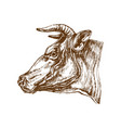 cow head profile sketch vector image vector image