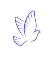 pigeon bird isolated holy dove vector image vector image