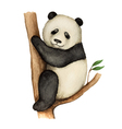 Panda watercolor isolated on white background vector image