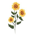 spring sunflower drawing with leaves vector image vector image