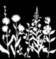 herbs silhouettes vector image