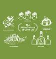vintage olive oil bottle hand vector image vector image