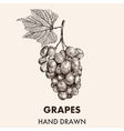 Sketch grapes cluster with a leaf Hand drawn vector image vector image