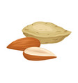 almond nuts in shell and half peeled vector image vector image