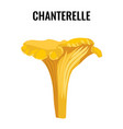 chanterelle yellow fungus isolated on white vector image vector image