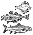cod salmon flounder fish isolated vector image