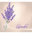 Lavender bouquet vector image