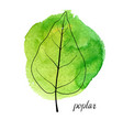 leaf of poplar tree vector image vector image
