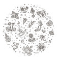 medical healthy herbs and flowers vector image vector image
