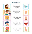 my five senses educational poster for kids sight vector image vector image